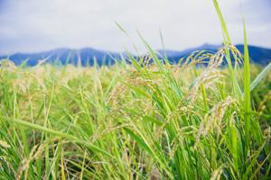 土と暮らすのお米